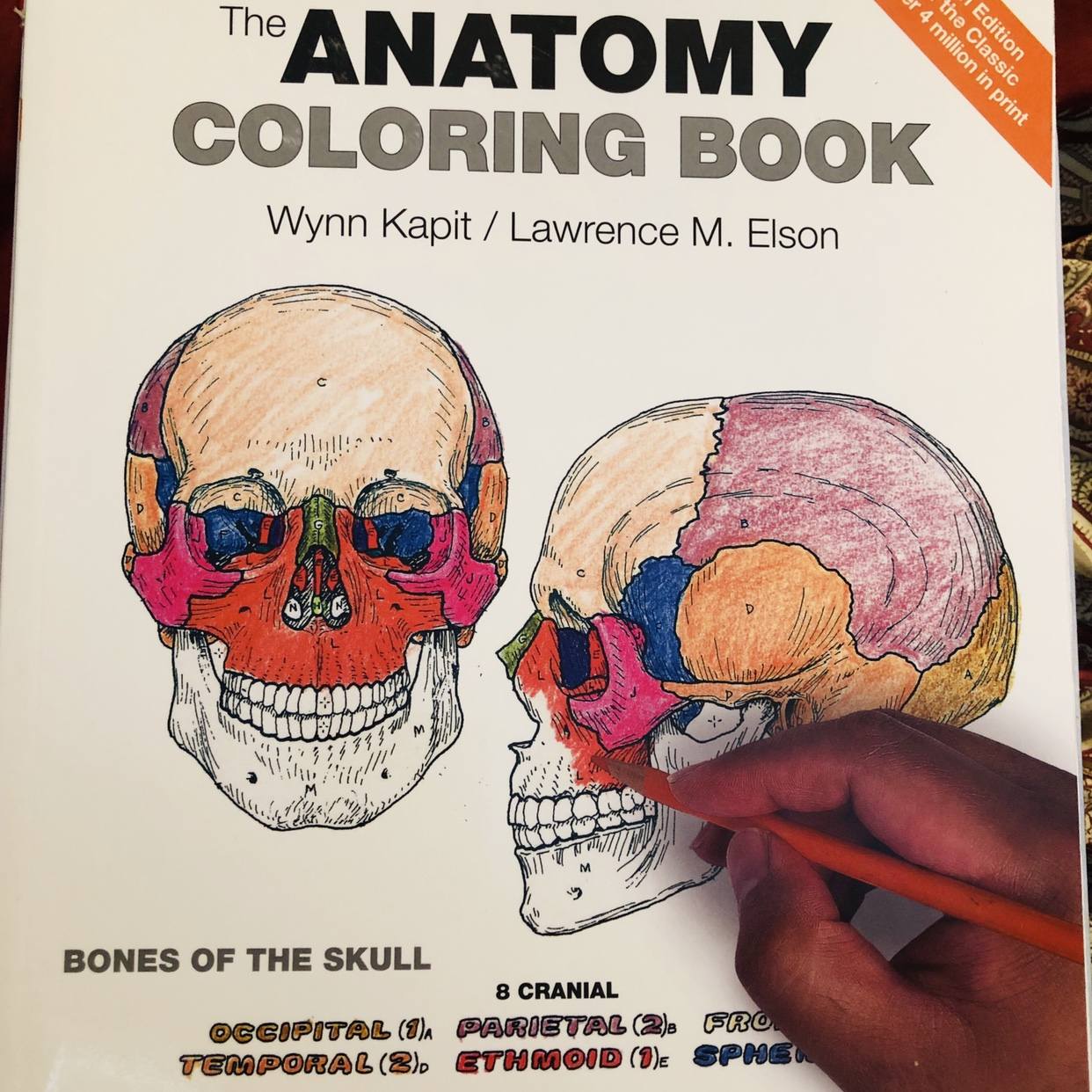 The Anatomy Coloring book 4th edition Wynn Kapit /... - Depop