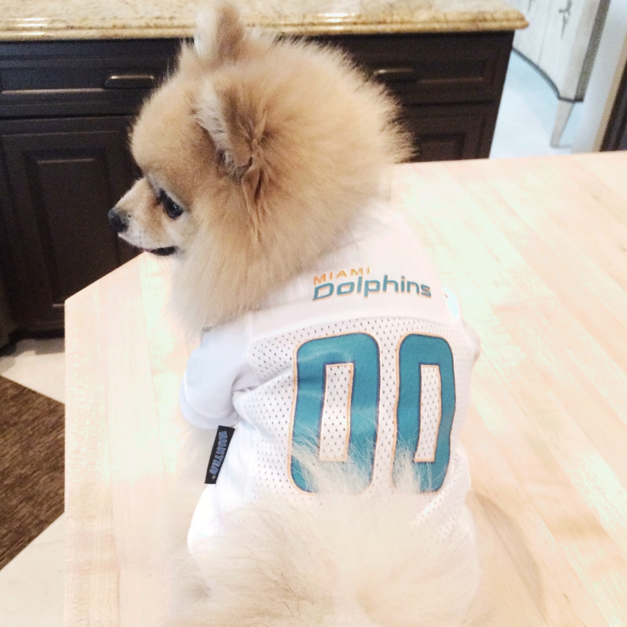 new concept 9362a a05fc Miami Dolphins dog jersey all sizes avail S, M, L,... - Depop