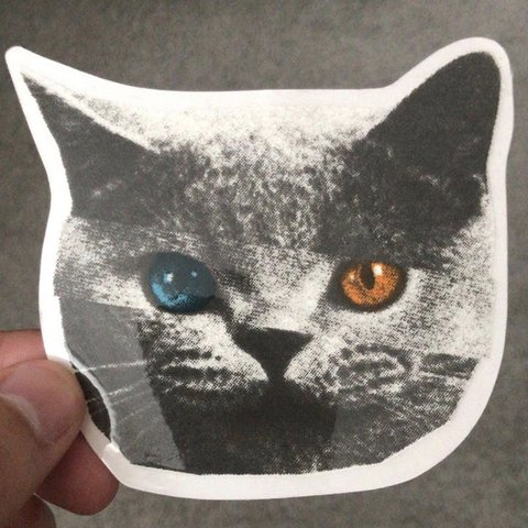dc5897c923b8 GOLF WANG ODD FUTURE SHARK CAT STICKER - Depop