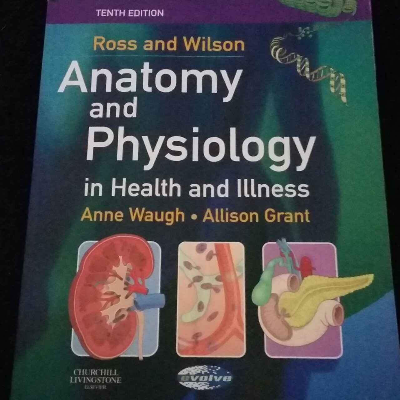 Anatomy and physiology textbook Brand new Never used - Depop