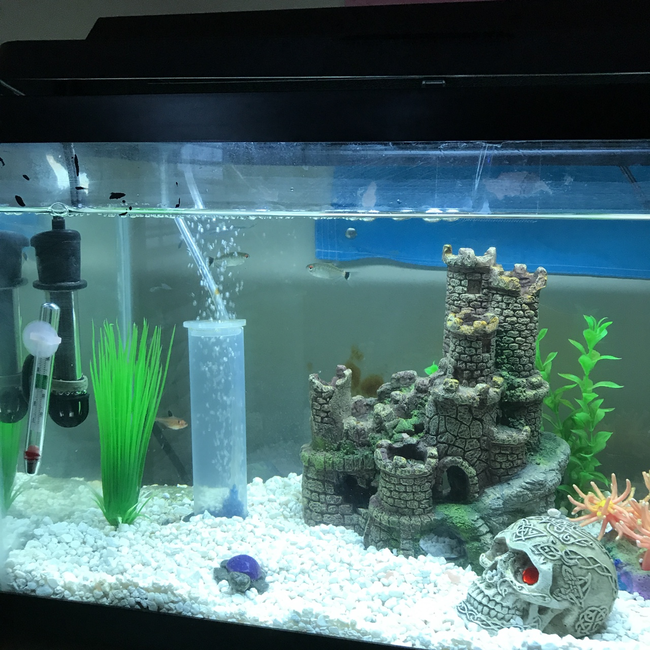 10 gallon fish tank with 3 red eyed tetras and a red    - Depop