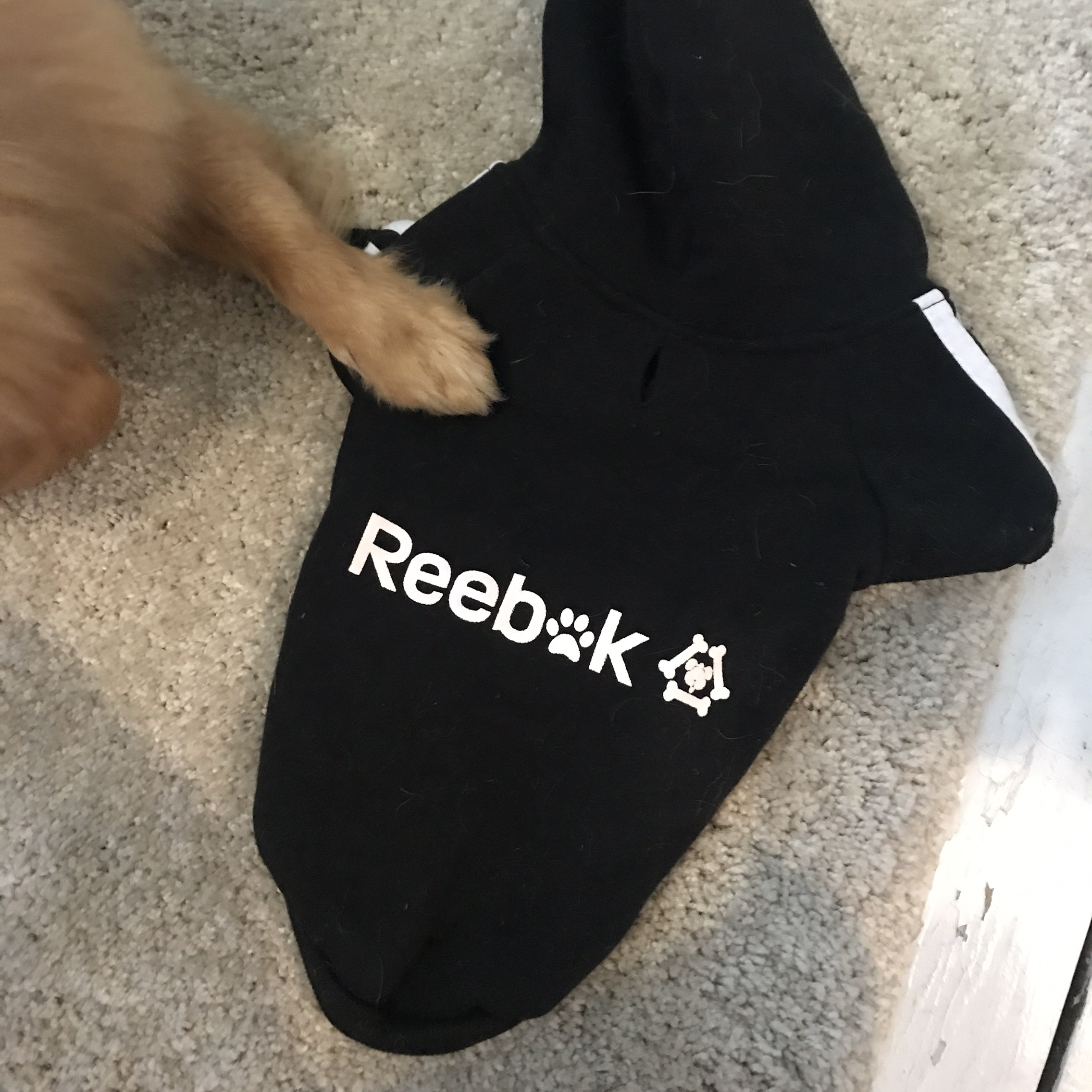 in stock big sale separation shoes Adorable doggy dog hoodie adidas style reebok size S ...